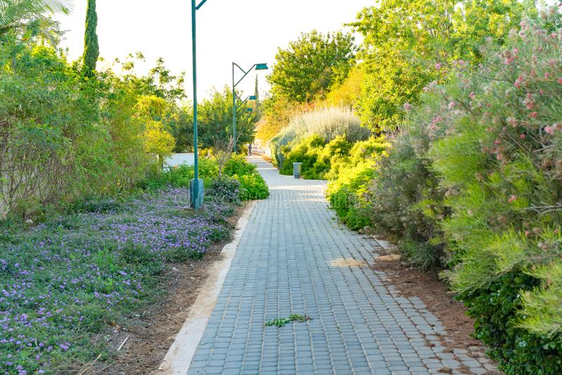 Nice garden path view with grass and trees. In Israel country stock photo