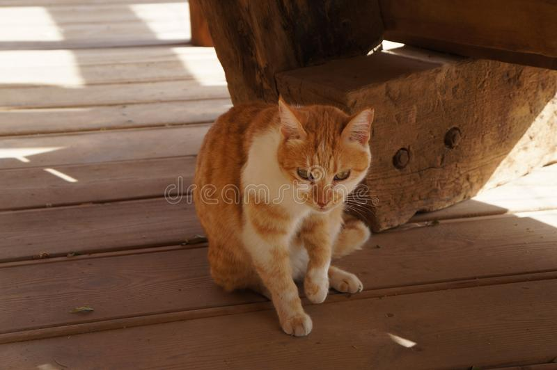 Nice ginger cat on the wooden deck. Nice ginger cat sits on the wooden deck royalty free stock photo