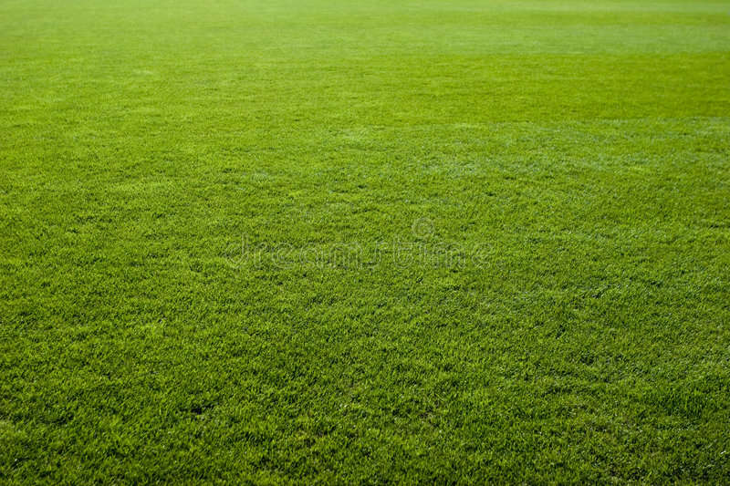 Nice Green Grass Texture Stock Image. Image Of Soccer