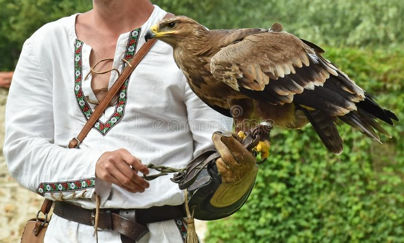 Nice hawk on the hand outdoors. B stock images