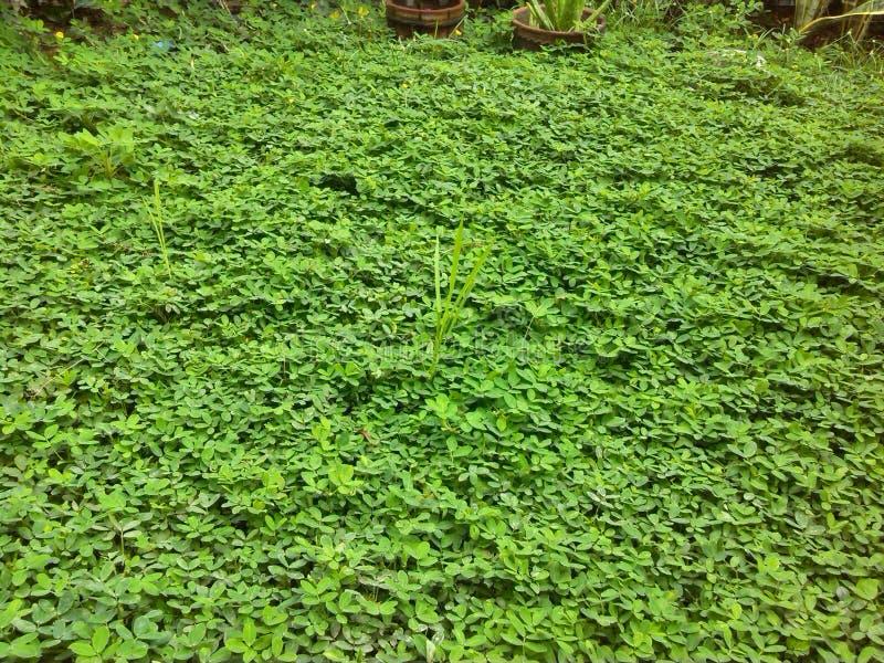 Nice lucky grass stock photos