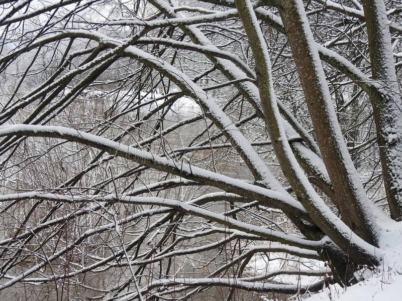 Beautiful snowy trees near river , Lithuania stock image
