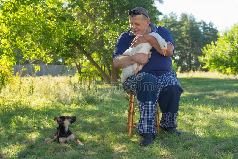 Outdoor portrait of senior man his cute puppy sitting next to him and white goose on the hands royalty free stock images