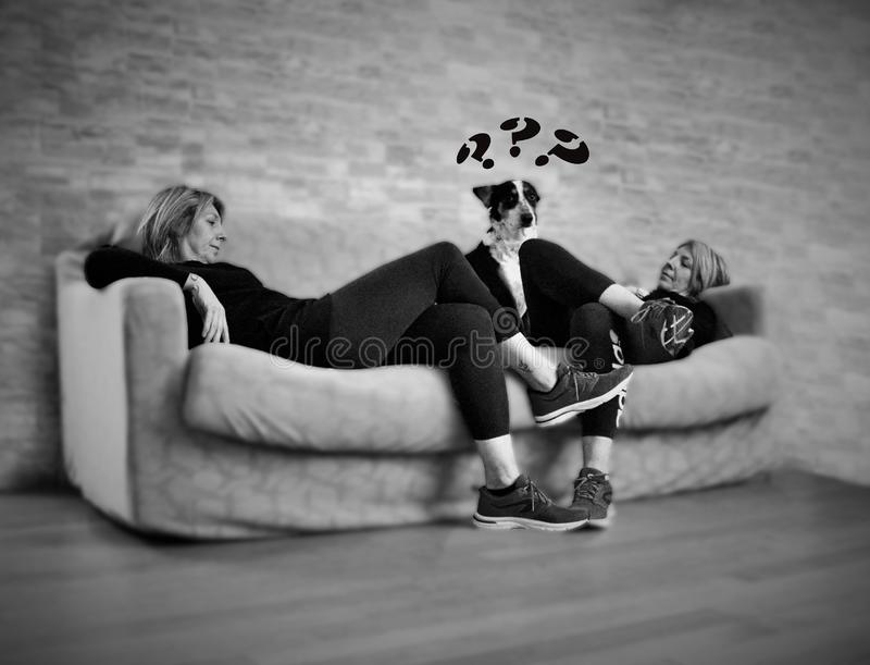 Nice photo in black and white that portrays a dog confused by the fact that he sees two masters .... Nice photo in black and white that portrays a dog confused stock photography