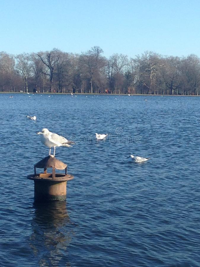 Hyde Park is awesome! royalty free stock photo