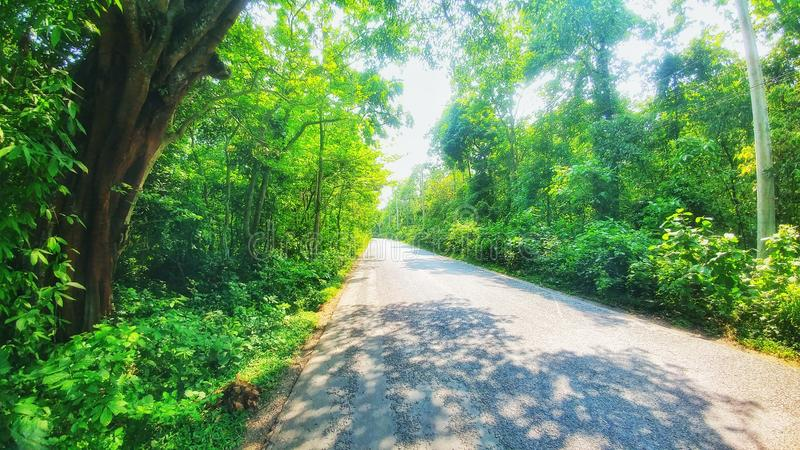 Bequtiful road in forest bangla royalty free stock photography