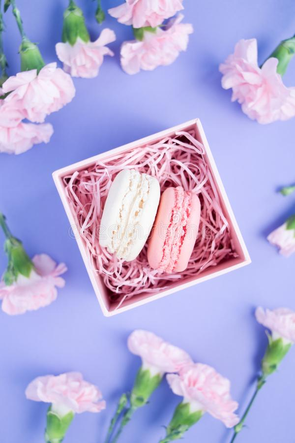 Nice pink carnation flowers and two macaroons in decorative box on a violet background royalty free stock photography