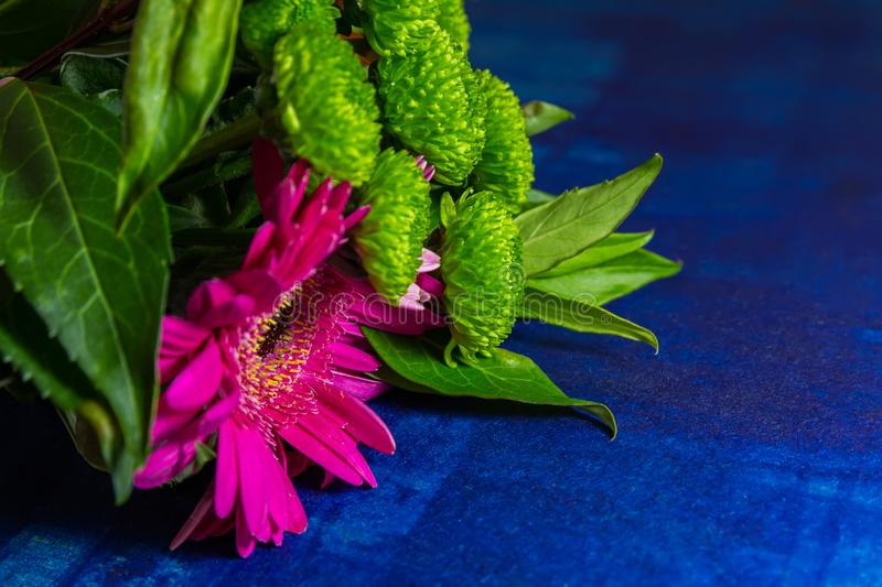 Nice pink gerbera daisy flower with green leaves on blue background stock photos