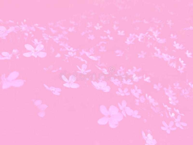 Nice pink light decoration small flowers picture nature royalty free stock photo
