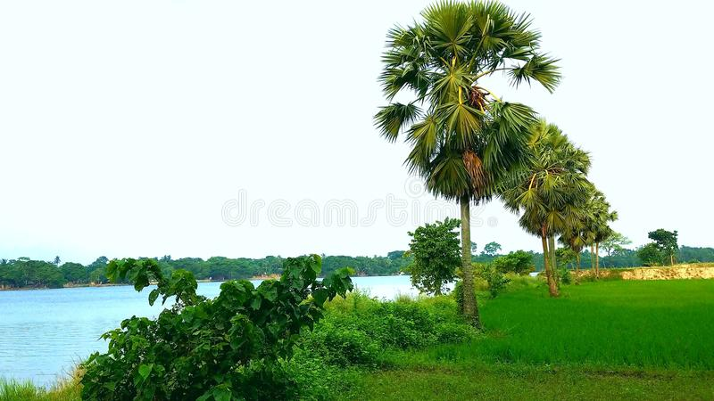 Neutral. Nice place in saed rivers royalty free stock image