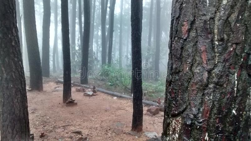 Nice place in tirupati. Nice trees at tirupati in nallamala forest stock image