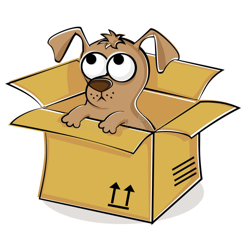 Free Nice Puppy In Box Royalty Free Stock Photos - 20237258