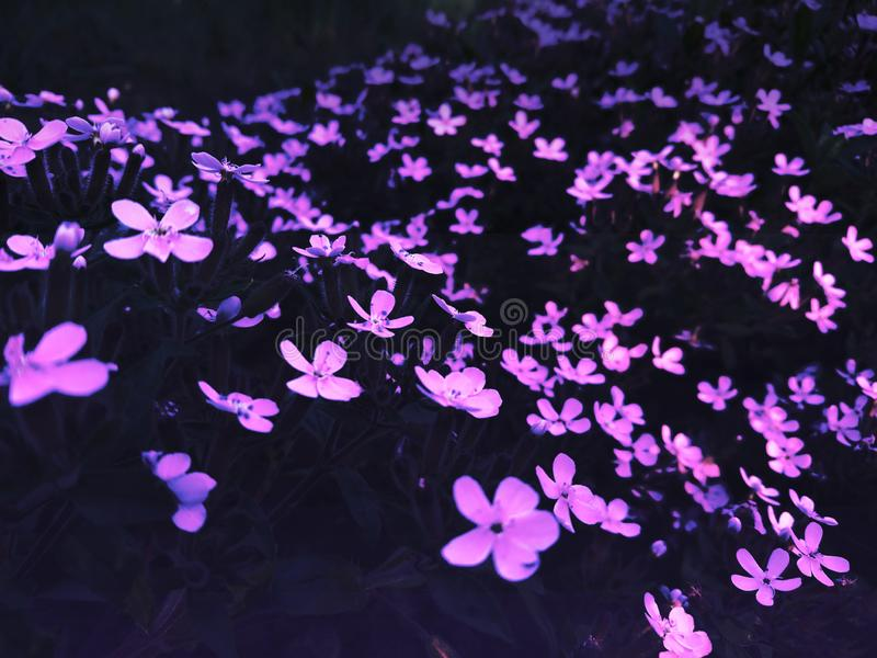 Nice purple contrast dark picture nature stock photography