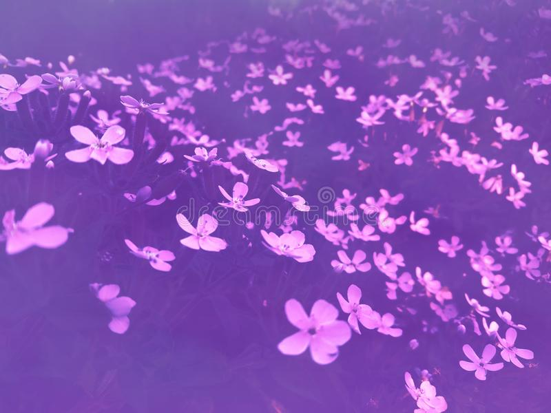 Nice purple contrast dark picture nature royalty free stock images