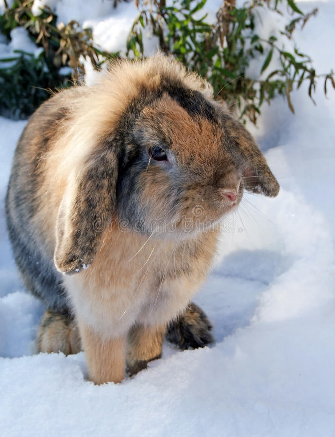 Download Nice rabbit on snow stock photo. Image of little, ears - 28637760