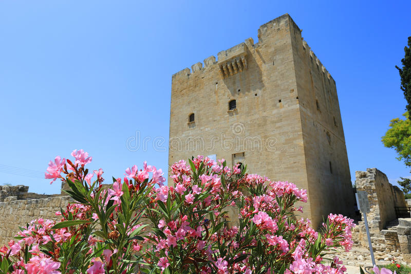 Nice rhododendron flowers in Kolossi Castle royalty free stock images