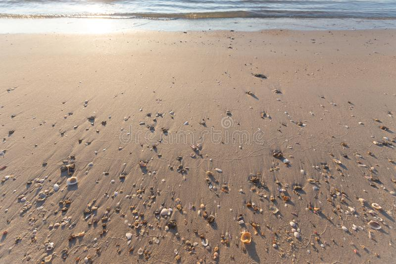 Nice sandy beach and shells. In the morning stock image