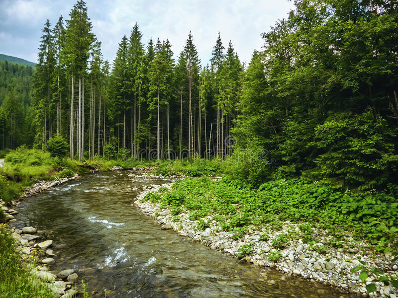 Nice scene with mountain river Prut in green Carpathian forest royalty free stock photography