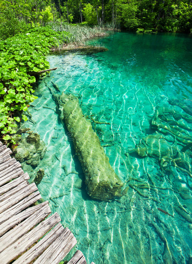 Nice small lake in Croatian national park Plitvice Lakes with submerged trunk. Nice small lake in national park Plitvice Lakes with submerged trunk royalty free stock images