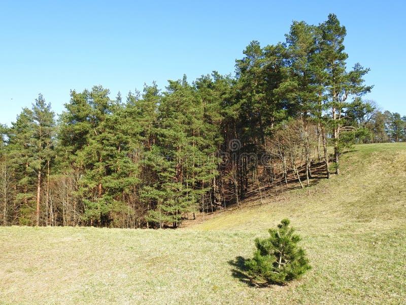 Beautiful Sudargo mound near river Nemunas, Lithuania royalty free stock photos