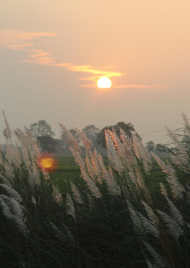 A nice sunset with reeds- natural landscape. stock photography
