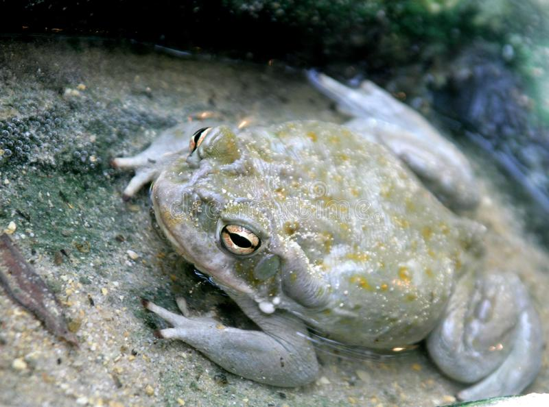 Nice toad 2 stock photography
