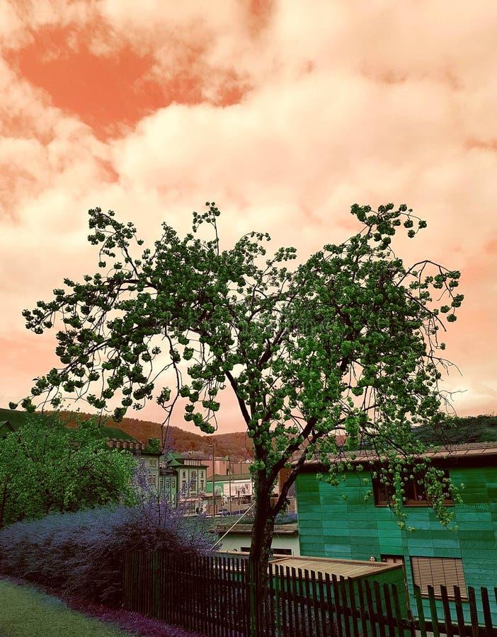 Nice tree royalty free stock photo