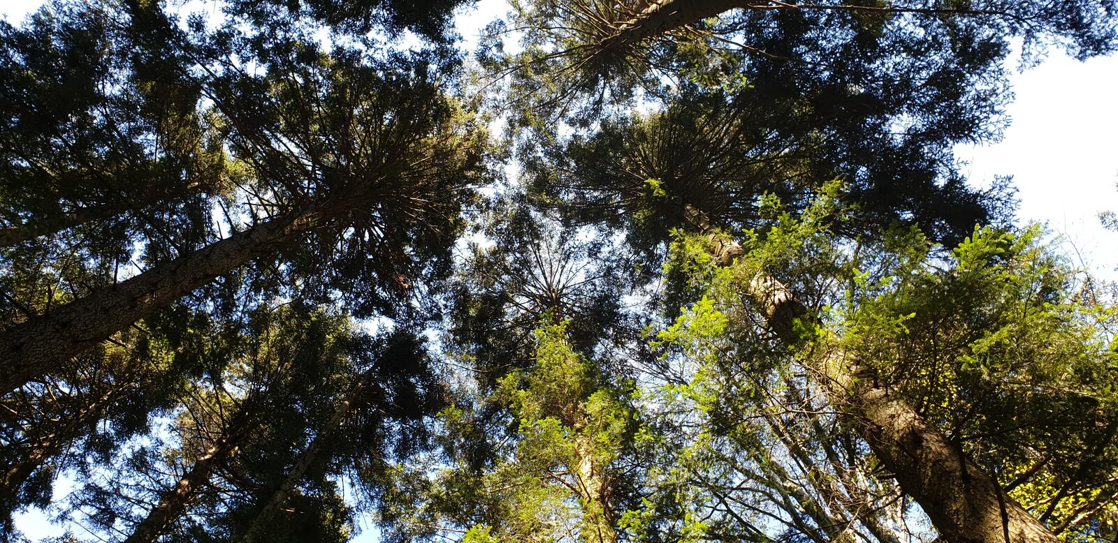 Nice trees in the forest on summer day. Best solution to spend rest of day stock photography