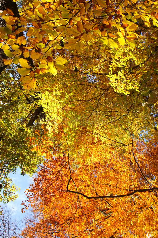 Autumn nature with its colorful trees stock image
