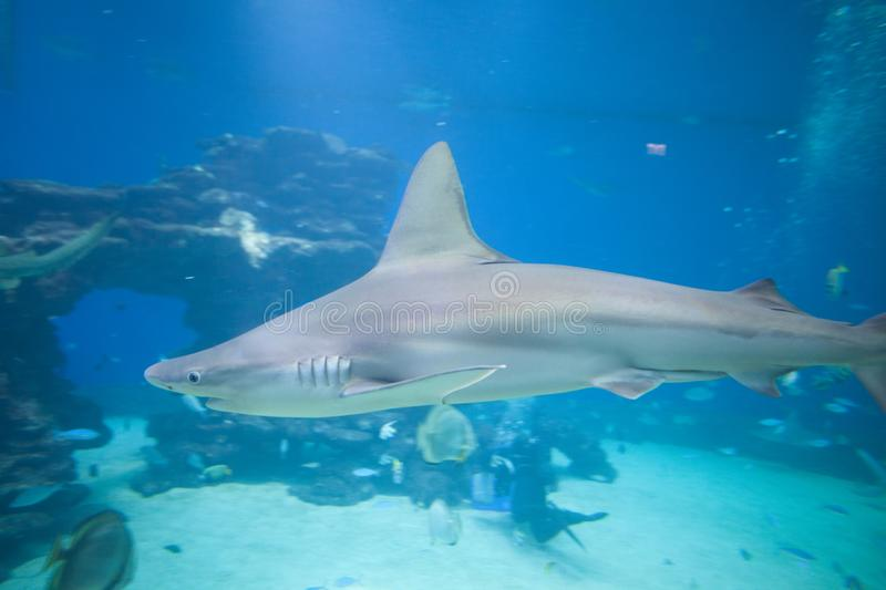 Nice view of big shark royalty free stock images