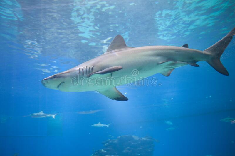 Nice view of big shark stock photos
