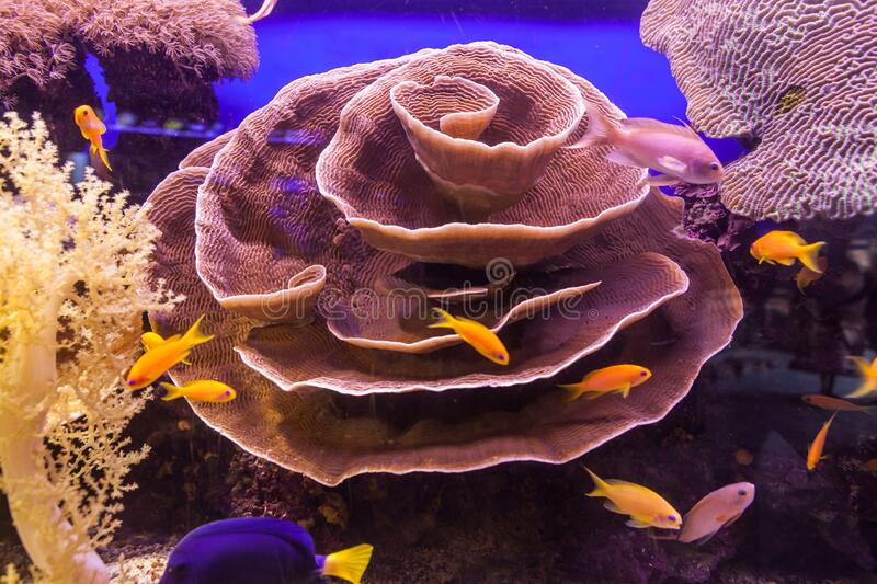 A Nice view of Coral reef royalty free stock photography