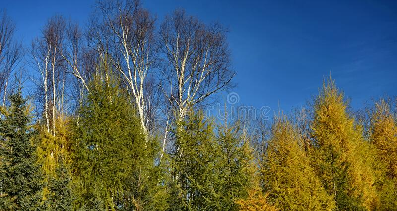Nice view on some trees at fall in Quebec. Canada on a sunny day royalty free stock image