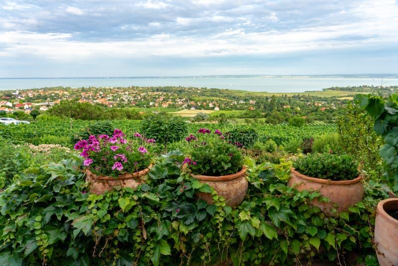 Nice vineyard farm over the Lake Balaton in Hungary with flowers stock photos