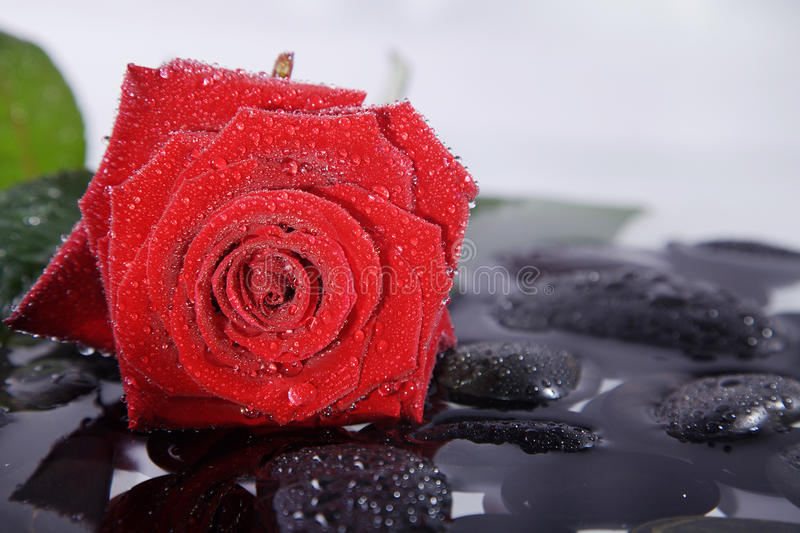 Nice wellnes close shot with red rose and stones. Wellnes close shot with red rose and stones royalty free stock image