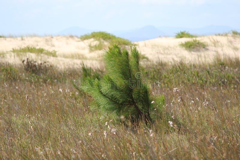 Green paradise in the brazilian coast stock image