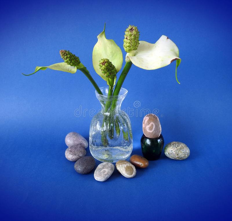 Beautiful flowers in vase and stones, Lithuania stock photos