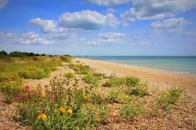 Nice wildflowers beach nature Kent England royalty free stock photo
