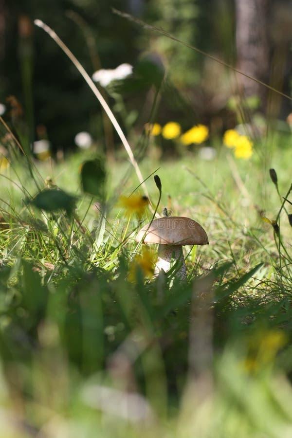 Nice, zonnige dag in het de herfstbos stock afbeelding