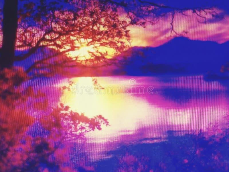Nicepic fantastiskt trä för skönhetvattenson arkivbilder