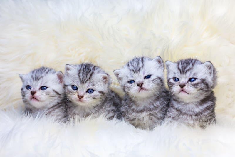 Nichez avec quatre jeunes chats tigrés dans une rangée photo libre de droits