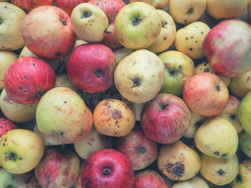 Nicht der Norm entsprechende Äpfel verdorben Hintergrund weg von den wilden Äpfeln stockbilder