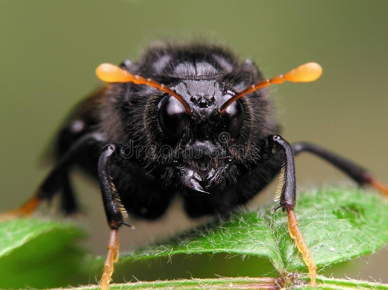 Nicht identifizierentes Insekt stockfotos