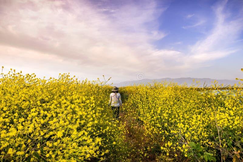 Nicht identifizierte Person, die auf einen Weg ausgerichtet mit schwarzer Senf Kohl Nigra Wildflowers, Bereich San Jose, San Fran lizenzfreie stockfotografie