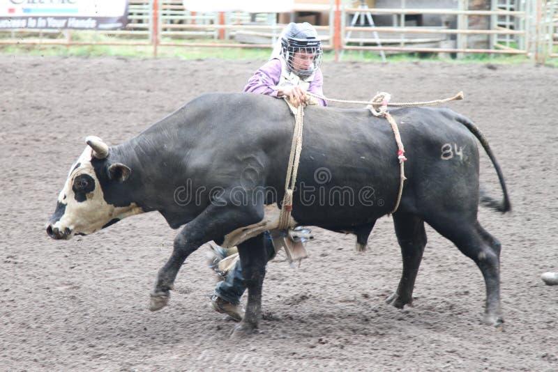 nicola rodeo dolina obraz royalty free