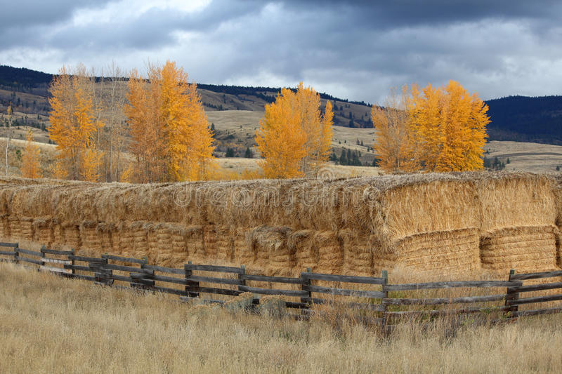 Nicola Valley Haystacks, British Columbia. Hay is stacked and stored for the winter in the Nicola Valley of British Columbia stock images