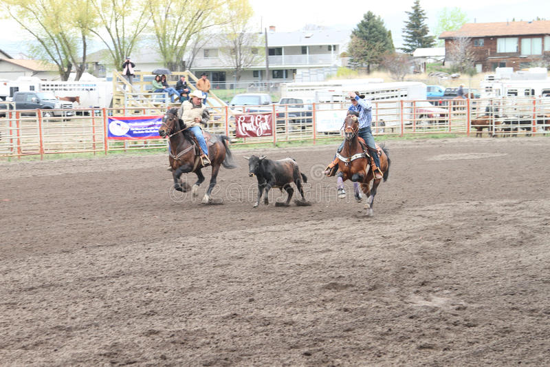 Nicola Valley Rodeo stock photography