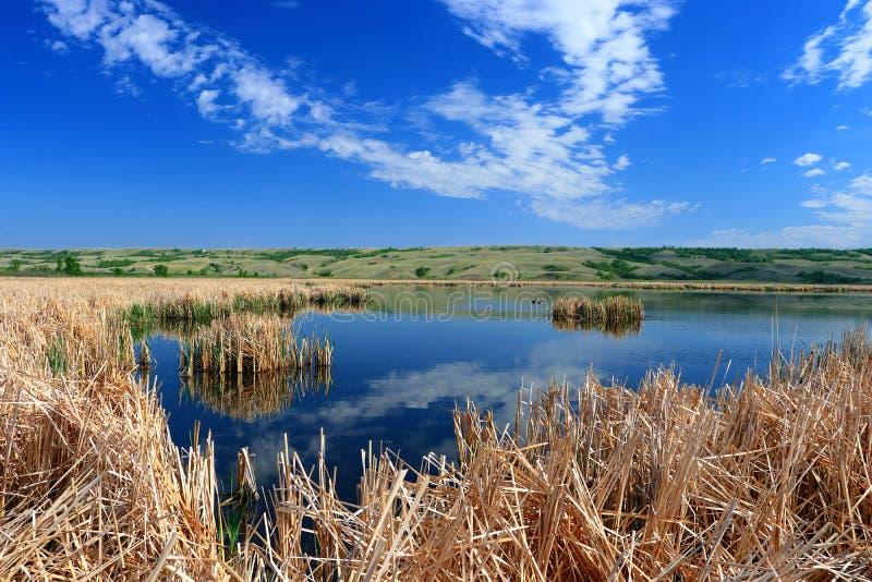 Nicolle Marsh in de Riviervallei van Qu 'appelle, Buffels verplettert Provinciaal Park, Saskatchewan stock afbeelding
