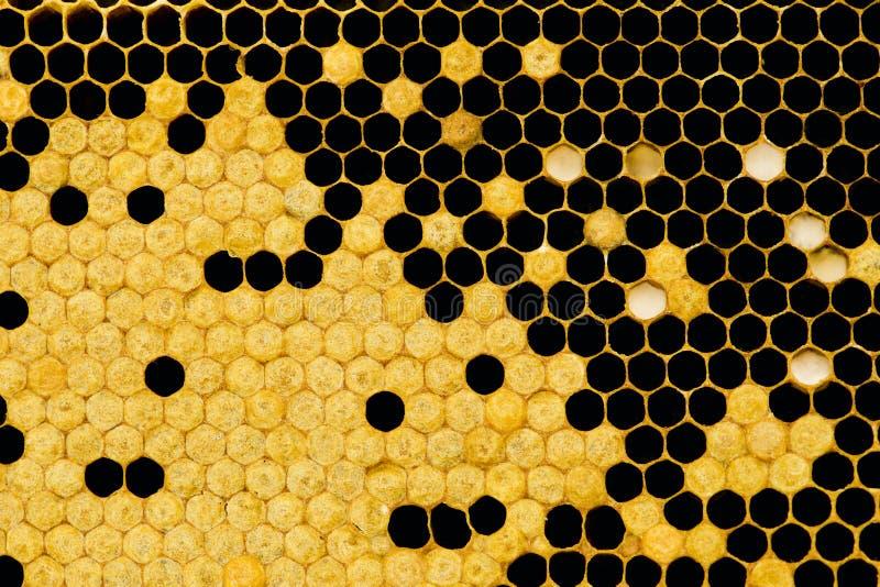 Nid d'abeilles   images stock