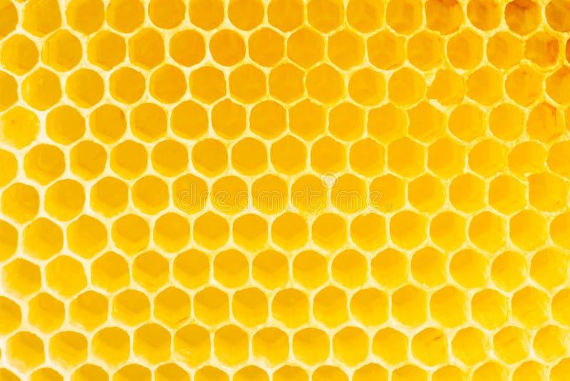 Nid d'abeilles photos libres de droits